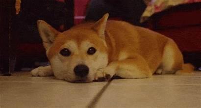 Dog Ears Doge Pet Weird Facts Rover
