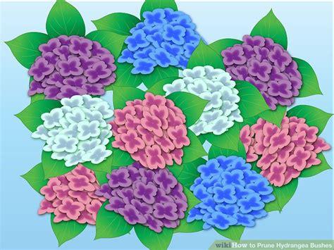 how do you prune hydrangea bushes how to prune hydrangea bushes 5 steps with pictures wikihow