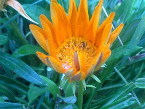 Plantas De Jardin Resistentes Trendy Las Plantas Ms