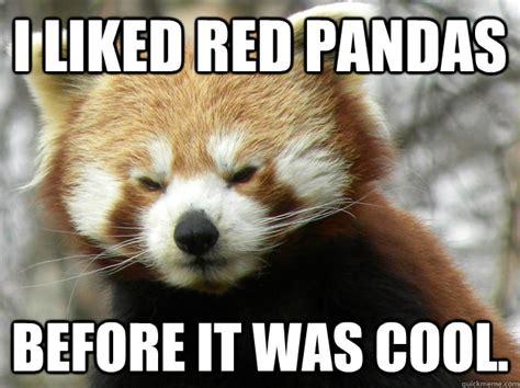 Red Panda Meme - i liked red pandas before it was cool hipster red panda