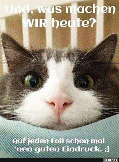 8 besten lustige katzenbilder bilder auf lustige bilder guten morgen und lustige katzen
