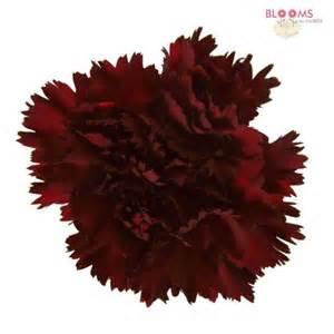 peonies wholesale burgundy carnations wholesale bloomsbythebox