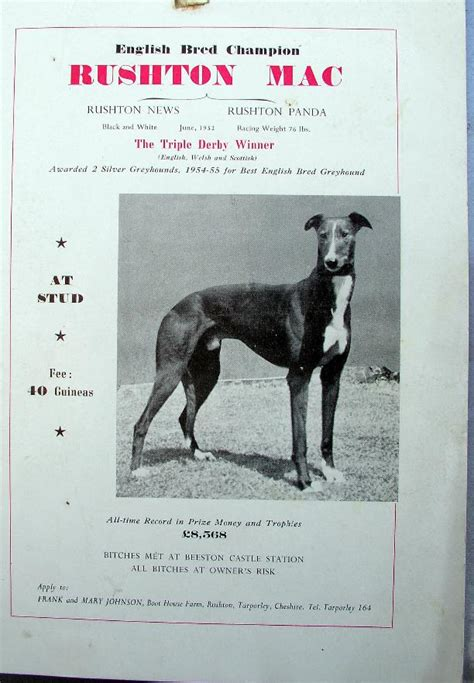 greyhound derby 1955 chester auctioneers byrne greyhoundderby