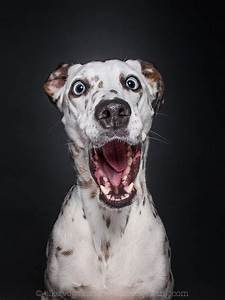 Wouda Interviews International Dog Photographer Elke ...