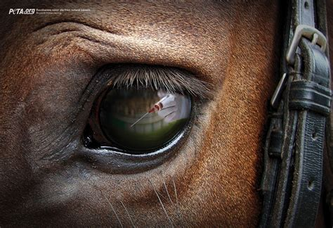 horse eye reflections peta graphis