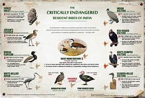 Birding in Coimbatore: Critically endangered bird species ...