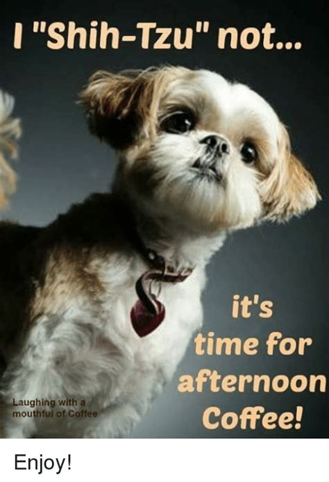 The best part about coffee is that you can drink it anytime you want. Shih-Tzu Not It's Time for Afternoon Laughing With a Coffee! Mouthful of Coffee Enjoy! | Meme on ...