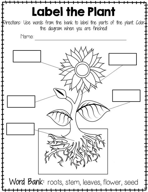 parts of a plant worksheet for kindergarten worksheets for