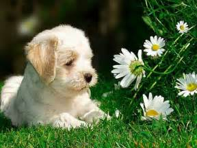 Cute Dogs and Flowers