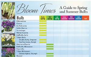 Bloom Times  Guide To Spring And Summer Bulbs