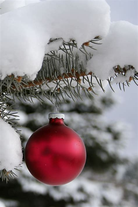 ornaments on outdoor tree