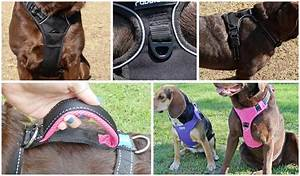 10 Leash Pulling Training Tips Using A Dog Harness  U2013 Top