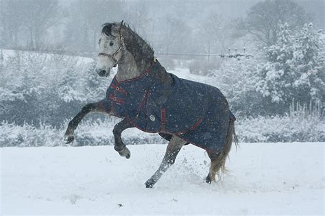 horse winter horses cold weather rugs health warm keep blanket haarlem rug oil conditions blanketing effects gut michael posted there