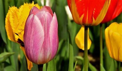 Britzer Garten Instagram by Tulipan Im Britzer Garten 21 04 2018 Event News Berlin