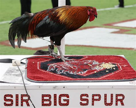 26+ University Of South Carolina Football Live  Pictures