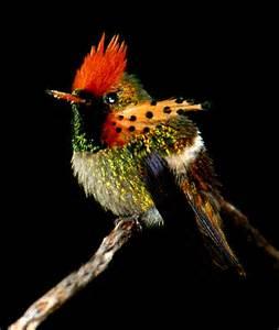 Bee Hummingbird Smallest Bird in the World