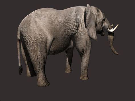 3d model elephant 3d model buy elephant 3d model