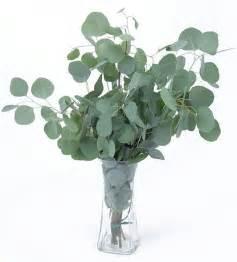 italian wedding favors silver dollar eucalyptus d j 39 s june wedding