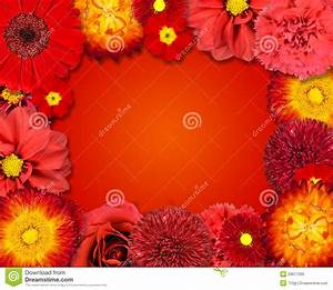 Flower Frame With Red Flowers On Orange Background Stock ...