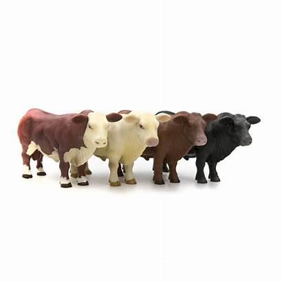 Bull Angus Hereford Herd Charolais Toys Buster