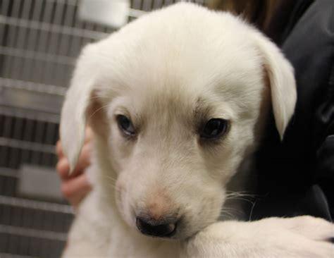 pound puppy  stock photo public domain pictures