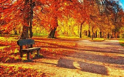 Bench Park Autumn 4k Foliage Ultra Background