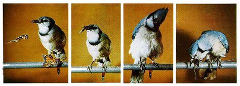 do birds taste good ornithology