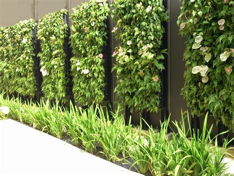 Plants For Vertical Gardens by Vertical Garden System For And External Walls Of