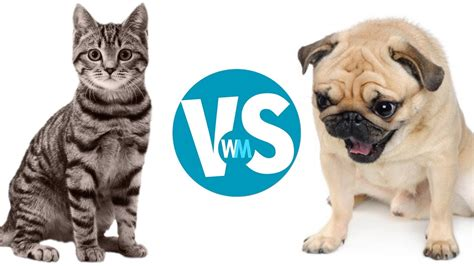 Cats Versus Dogs How They Are Really Rivals?