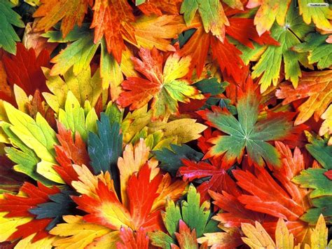 Colourful Autumn Wallpaper by In The Words Of A Poet L Parsons