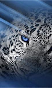 [42+] Leopard Wallpaper Phone on WallpaperSafari