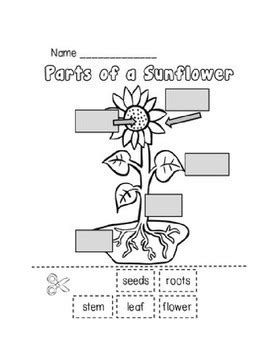 parts   plant worksheet  erica foster teachers pay