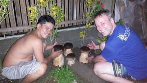 steinpilze selber zuchten pilze selber z chten steinpilze With französischer balkon mit pilze selber züchten im garten