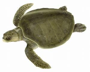 Habits and Habitats - The Leatherback Trust