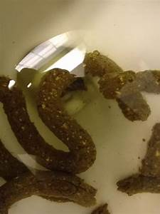 Parasites: What are these white specks in stool tapeworm ...