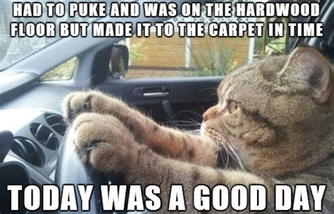 It Was A Good Day Meme - had to puke and was cat meme cat planet cat planet