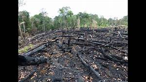 Deforestation  Facts  Causes  U0026 Effects