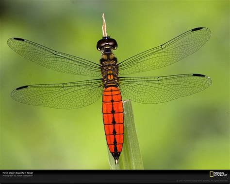 17 Best Ideas About Dragonfly Images On Pinterest