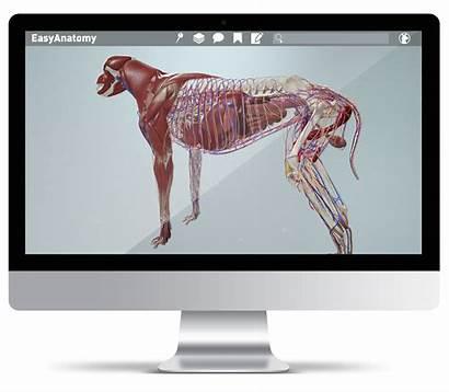 Anatomy Veterinary Easy Canine Study Virtual Students