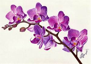 Purple orchid by Rustamova on DeviantArt