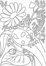 Ladybug Coloring Leave Insects Flowers Insectes Background Pages Adult Butterflies Animals Nature sketch template