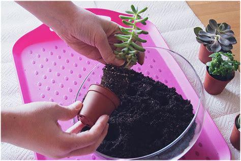 Mini Garten Selber Machen by Mini Garten Selber Machen Einen Miniatur Garten Auf Dem