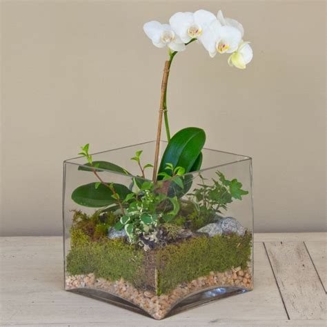 kaffeesatz als dünger für orchideen zimmeerpflanzen orchidee terrarium pflege wei 223 e bl 252 ten orchideen pflege bl 252 ten