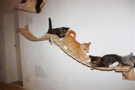 cat playground rooms transformed into overhead cat playgrounds with