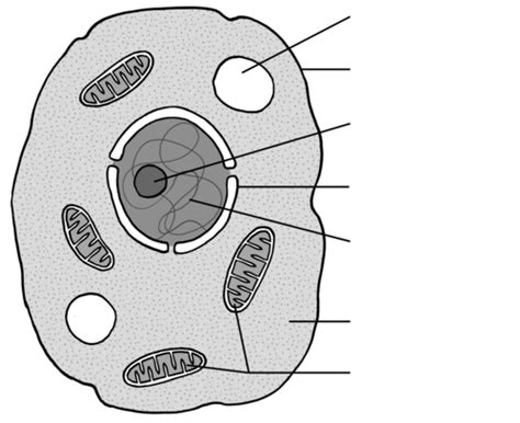 difference  plant  animal cells cells