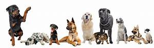 carolinas critter sitters pet sitters dogs cats With the dog sitter