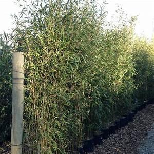 Bac Rectangulaire Pour Bambou : bac beton pour bambou shamwerks terrasse project terrasse ~ Nature-et-papiers.com Idées de Décoration