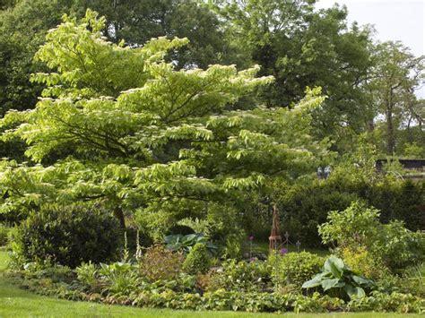 wie lange darf bäume schneiden wie lange braucht gras zum wachsen osnabr cks studenten h