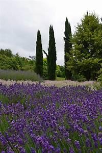 Lavendel Sorten übersicht : australien reisebericht so war das aber nicht geplant ~ Eleganceandgraceweddings.com Haus und Dekorationen