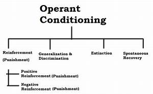 Operant Conditioning Definition and Concepts - Psychestudy